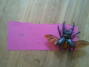 Drawing a stag beetle