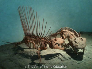 Denver Museum of Nature & Science. Dimetrodon vs Ophiacodon.