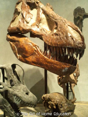 Denver Museum of Nature & Science. Different skulls among which