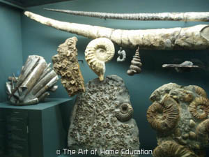 Denver Museum of Nature & Science. Fossils.