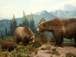 Denver Museum of Nature & Science. Brown bear which you can stil