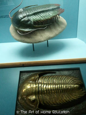 Denver Museum of Nature & Science - Trilobite