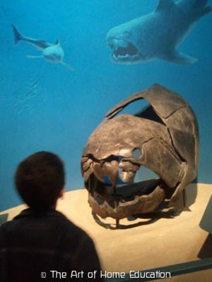 Denver Museum of Nature & Science. Dunkleosteus