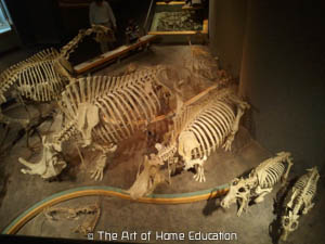 Denver Museum of Nature & Science. Mammals.